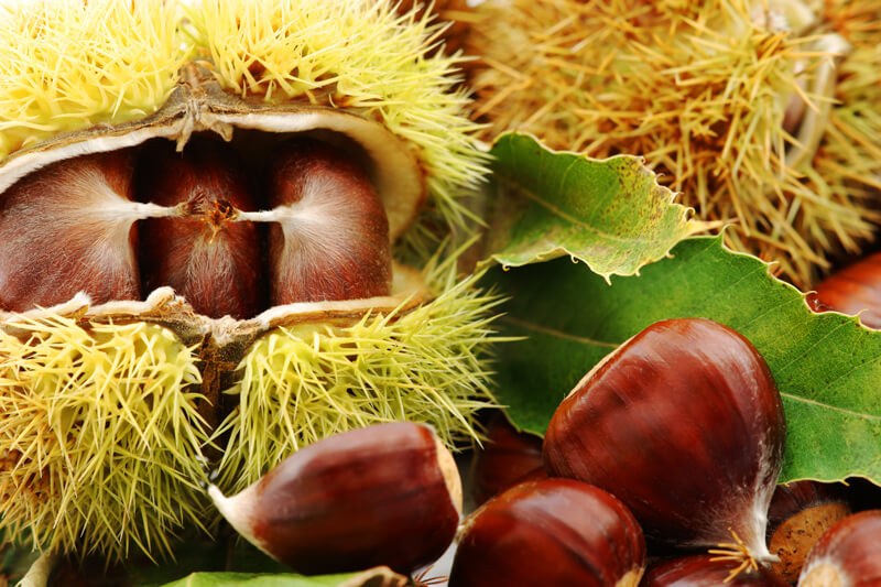 chestnuts-in-husk-and-hulled-chestnuts