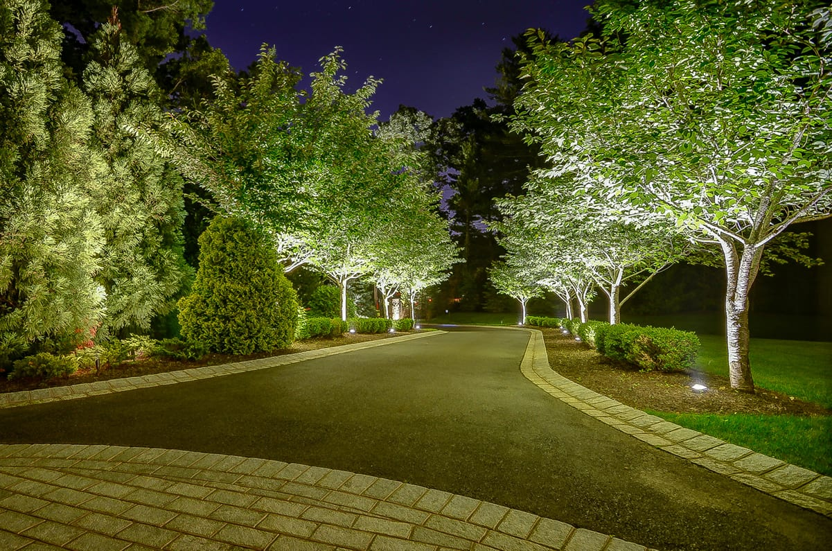 Upscale Driveway and Tree Lighting