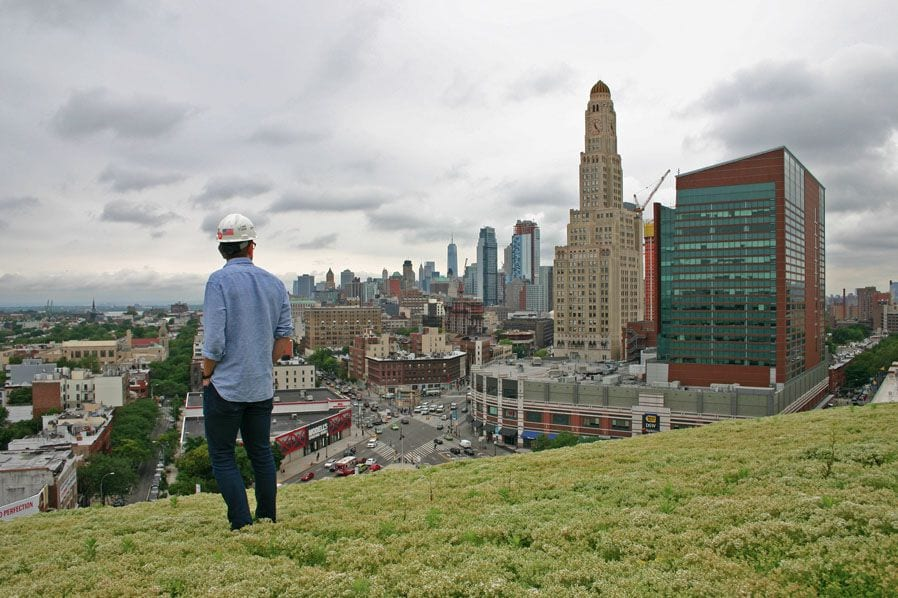 View from the Top of the Green Roof at Barclays Center