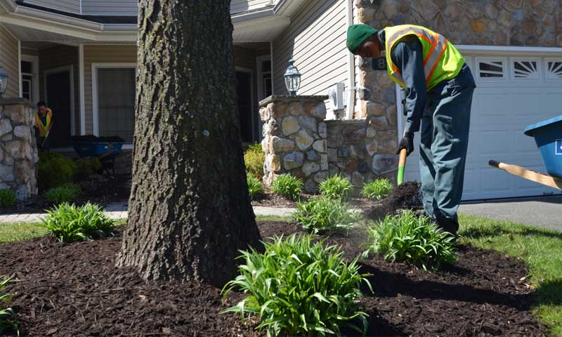 Landscape installing tree ring for protection