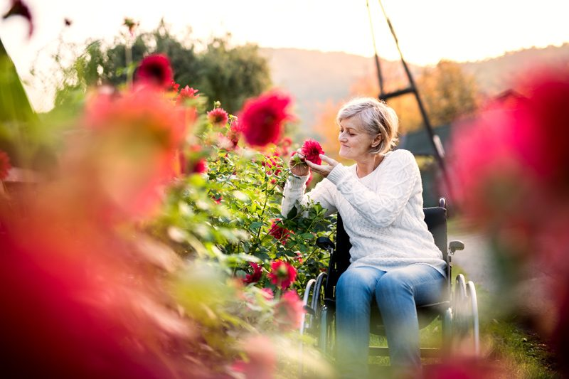 Woman in Wheelchair in a Garden Touching a Flower