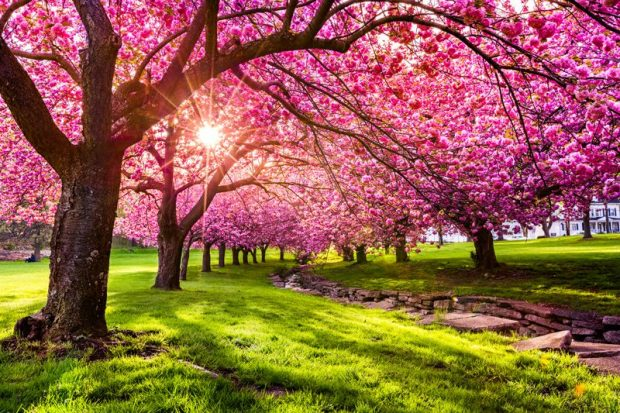 Beautiful Trees in Bloom