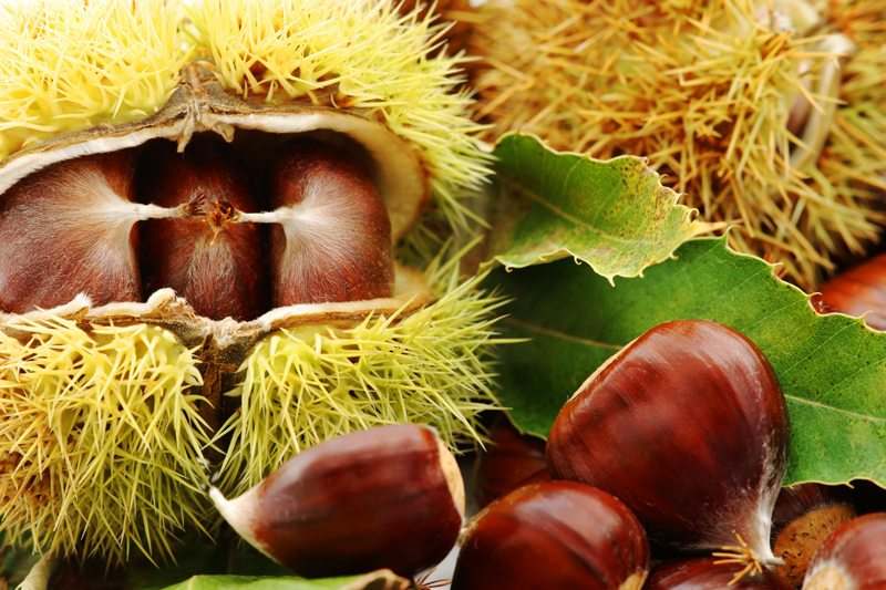 Chestnuts and Hulled Chestnuts