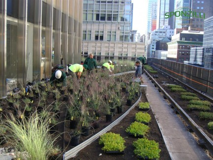Landscape Construction Crew Building a Green Roof