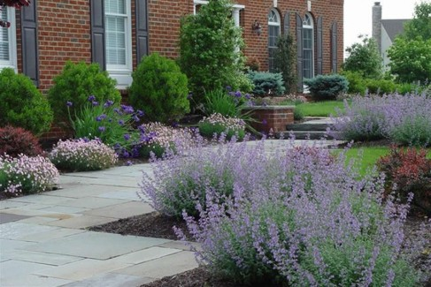 Beautiful Walkway and Plantings