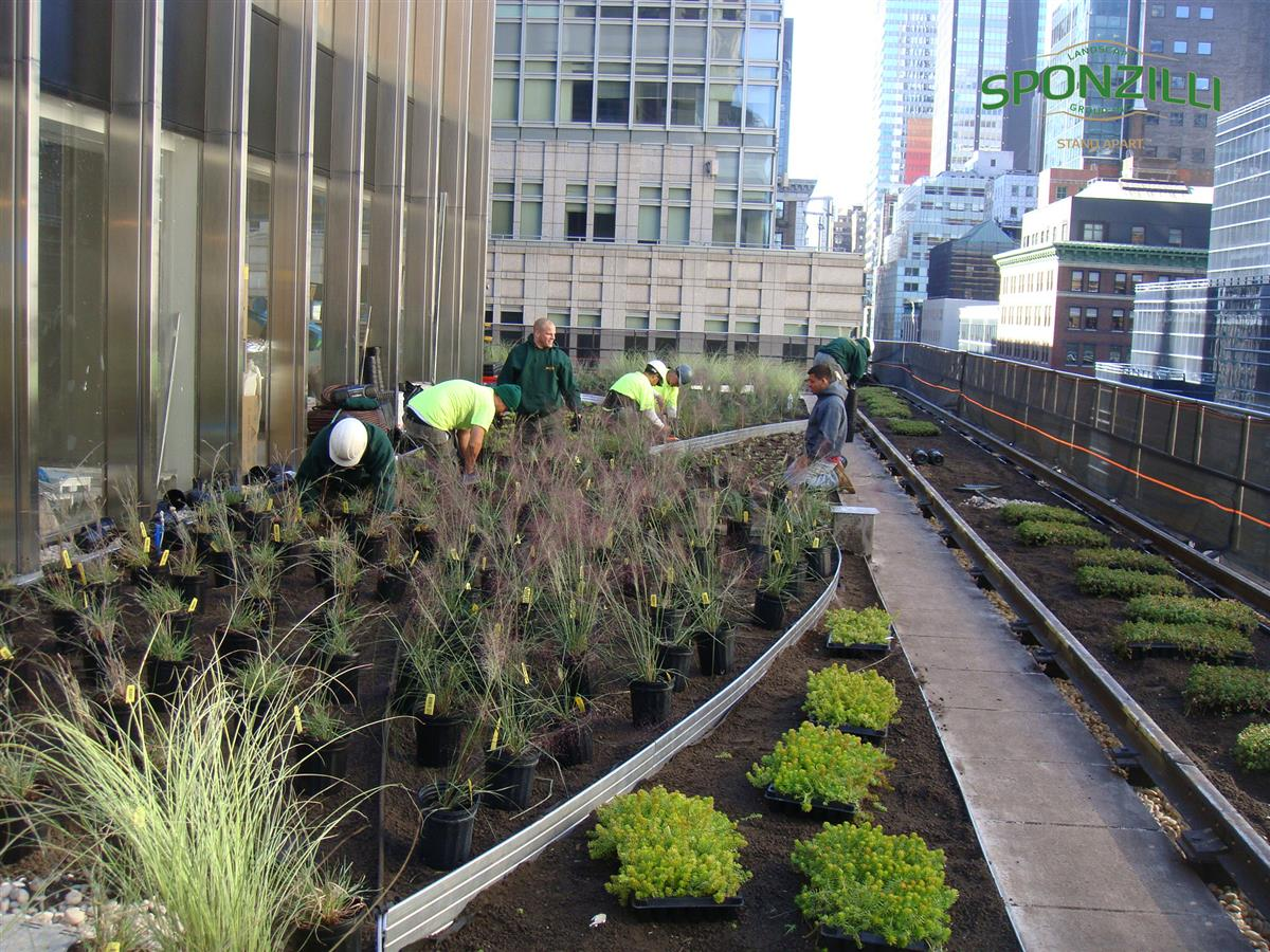 Green Roofs And Green Walls Sponzilli Landscape Group