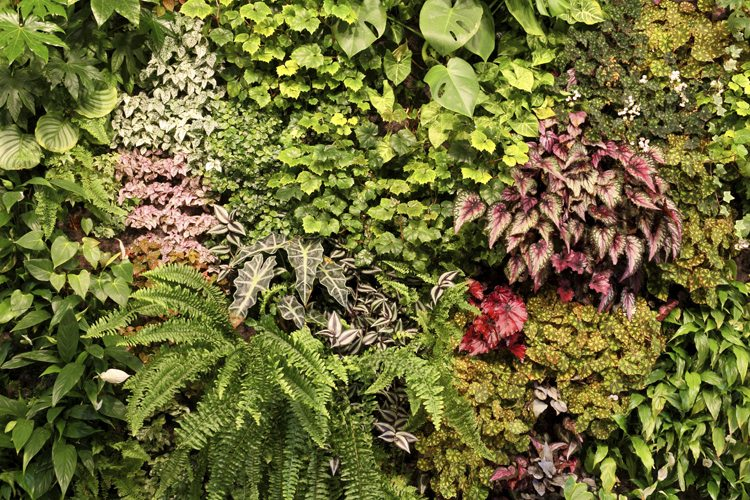 Residential green walls and vertical gardens sponzilli for Living plant walls