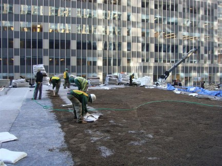 Landscape Construction at Hilton Hotel - NY