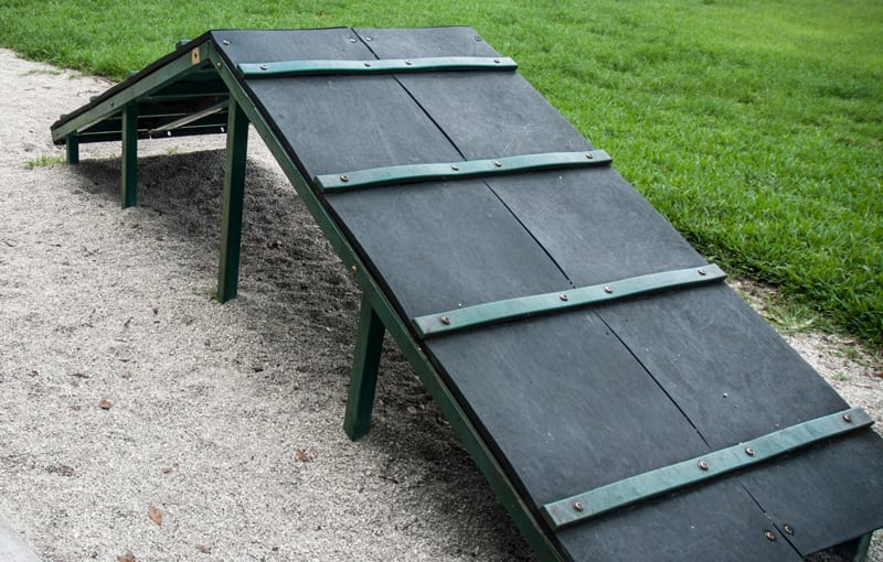 Pet Obstacle Course Ramp in Yard