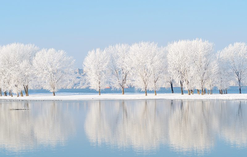 Snow Covered Trees Landscape
