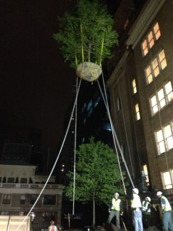 Hoisting a Tree to the 9th Floor Green Roof