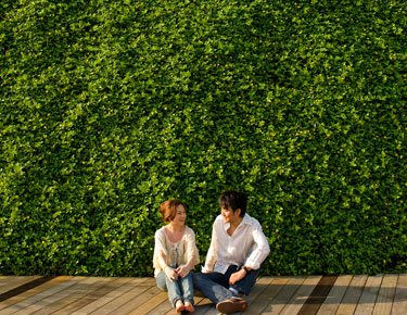 Couple in front of planted green wall