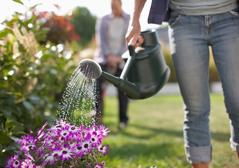 Person Watering Flowers in a Garden
