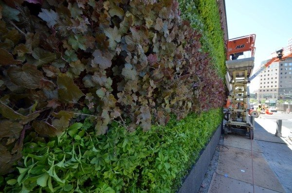 Construction on Green Wall at the World Trade Center